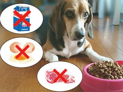 愛犬の食物アレルギーには様々なものがあります